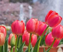 関西の人気スポット!春のイベント情報